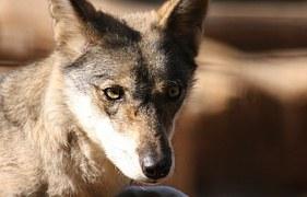 fox-88956__180